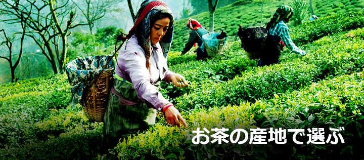 お茶の産地で選ぶ