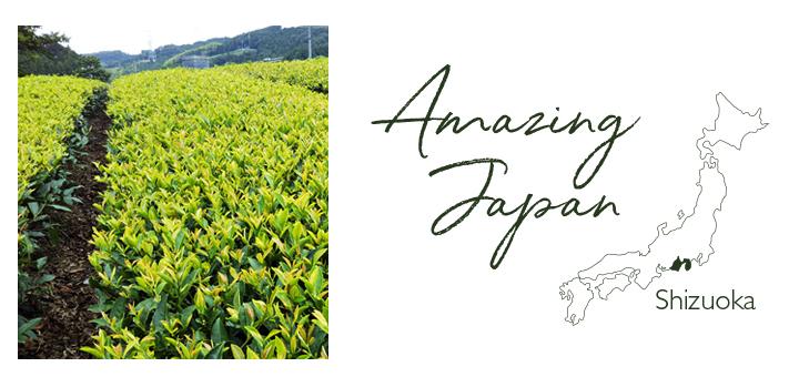 国産紅茶 静岡